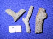 Alveolites winchellana (Miller)