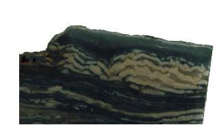 (Stromatolite) Ozarkcollenia laminata