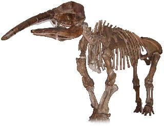 Eubelodon morrilli