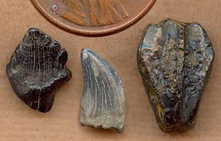 Ankylosauridae, Dromaeosauridae, Hadrosauridae