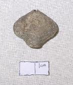 Athyris spiriferoides (Eaton)