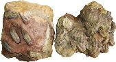 Rusophycus